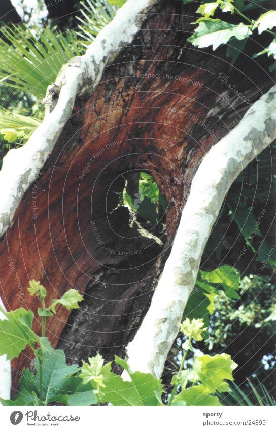 Baumloch Natur alt grün Loch Wunder