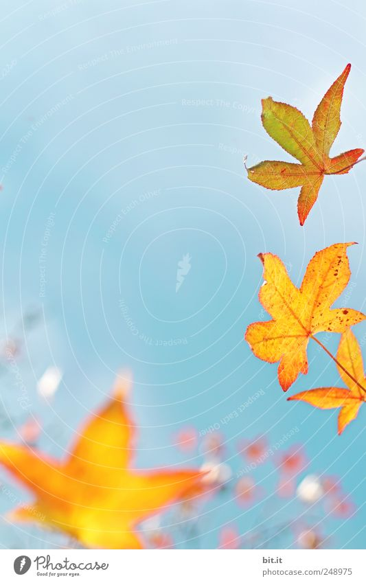 Unterwasser-Himmel II Natur Ferien & Urlaub & Reisen blau Pflanze Baum ruhig Blatt gelb Herbst Feste & Feiern Stimmung Sträucher Dekoration & Verzierung Klima