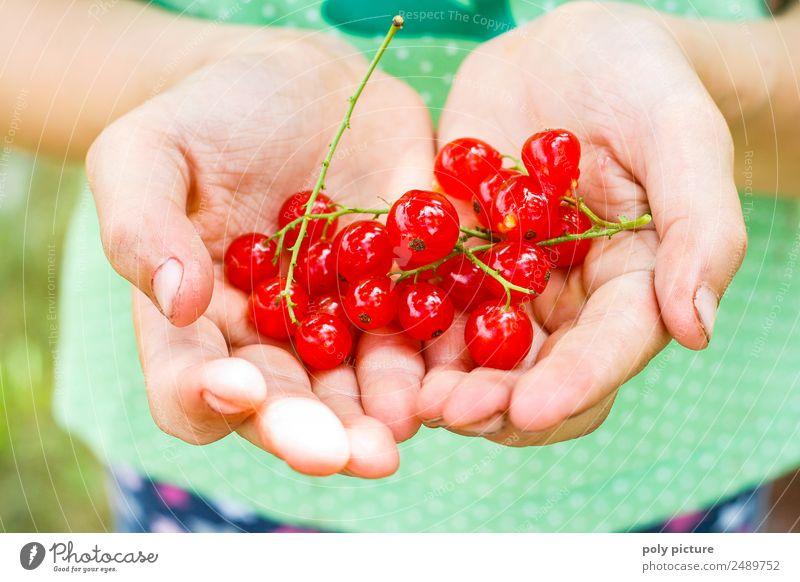 Kinderhand hällt Johannisbeeren Natur Jugendliche Sommer Pflanze Hand rot Freude Leben Umwelt Frühling Glück Garten Frucht Park Kindheit