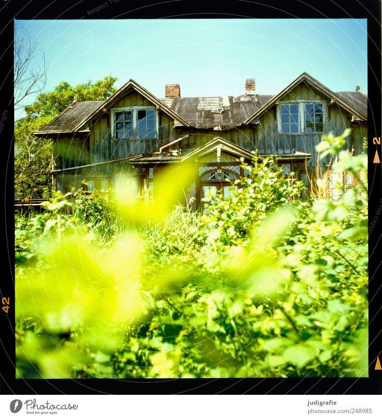 Am Bodden Umwelt Natur Landschaft Pflanze Sommer Schönes Wetter Sträucher Haus Hütte Ruine Bauwerk Gebäude Garten alt historisch kaputt Stimmung Verfall