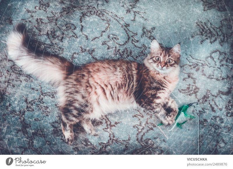 Junge Sibirische Katze auf dem Teppich Lifestyle Stil Freude Leben Erholung Häusliches Leben Tier Haustier 1 Design liegen lustig Farbfoto Innenaufnahme