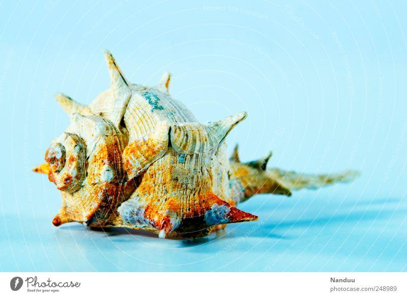 Ich wär so gern im Urlaub 1 Tier ästhetisch Wasserschnecken Muschelschale Strandgut Ferien & Urlaub & Reisen Sommer Urlaubsstimmung Farbfoto mehrfarbig