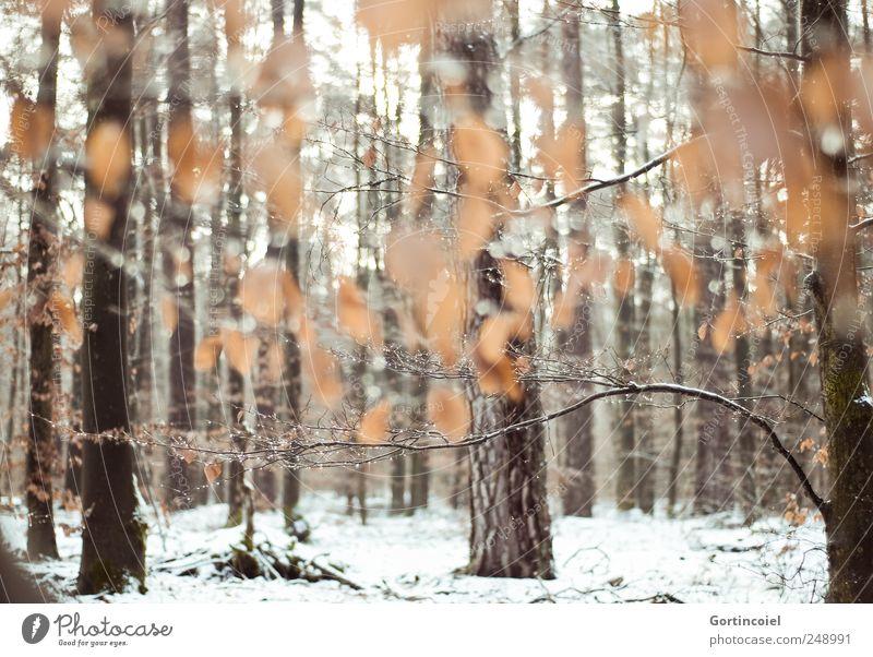 Le calme enchantement Umwelt Natur Winter Eis Frost Schnee Baum Blatt Wald kalt Kraft ruhig Winterwald Waldboden Laubwald Baumstamm Schneedecke Schneelandschaft