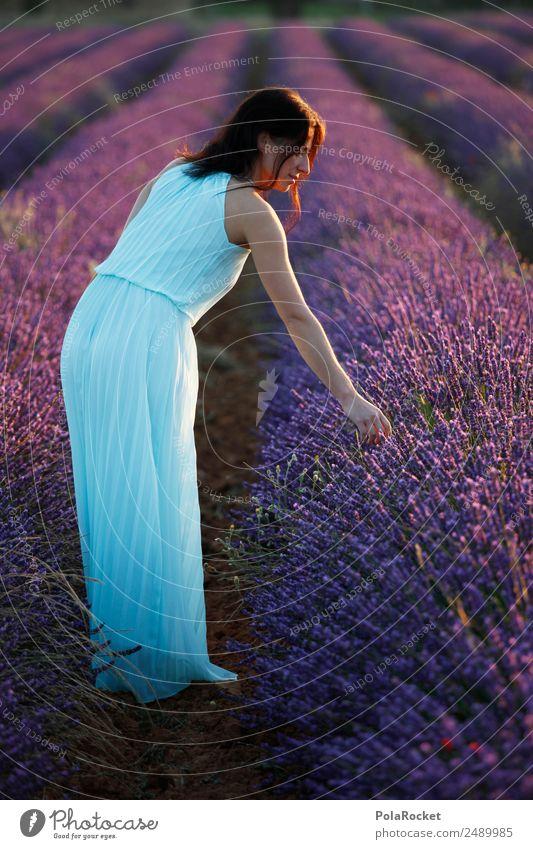 #A# Lavendel-Licht Frau Natur Pflanze Landschaft Mädchen Umwelt ästhetisch Idylle Blühend Romantik violett Kleid Frankreich Kitsch Provence