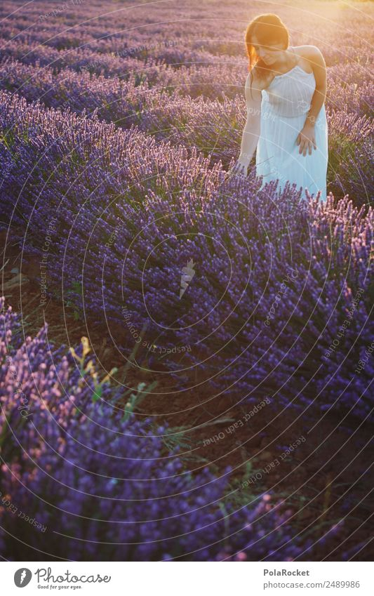 #A# Morgensonnen-Lavendel Frau Mensch Feld ästhetisch Idylle Blühend Romantik Kleid Frankreich Kitsch Provence Lavendelfeld Lavendelernte Blühende Landschaften