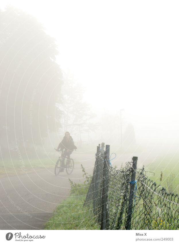 Radler Mensch 1 Natur Herbst schlechtes Wetter Nebel Wiese Straße Wege & Pfade fahren trist grau Zaun Fahrrad Fahrradweg Verkehrssicherheit Nebelschleier