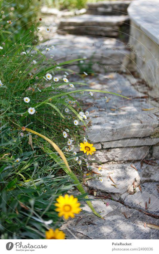 #A# Gartenweg Natur ästhetisch Gartenbau Gartenpflanzen Wege & Pfade Blume gelb mediterran Treppe Idylle Wegrand Farbfoto Gedeckte Farben Außenaufnahme