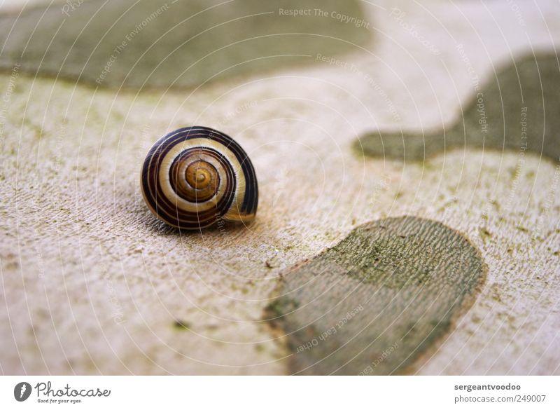 Eigenheim in ruhiger Randlage Häusliches Leben Wohnung Haus Traumhaus Hausbau Umwelt Natur Tier Schnecke Schneckenhaus 1 Spirale schlafen klein rund schleimig