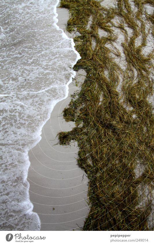 nature line Natur Wasser Sommer Strand Ferien & Urlaub & Reisen Meer Landschaft Umwelt Bewegung Sand Küste Wellen Wind Urelemente Nordsee Sturm