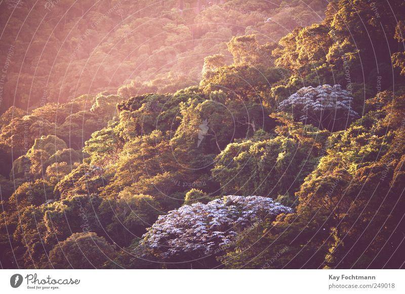 Mata Atlântica Natur grün Baum Pflanze Sommer Ferne Erholung Umwelt Landschaft Zufriedenheit gold wild ästhetisch außergewöhnlich Schönes Wetter Urwald