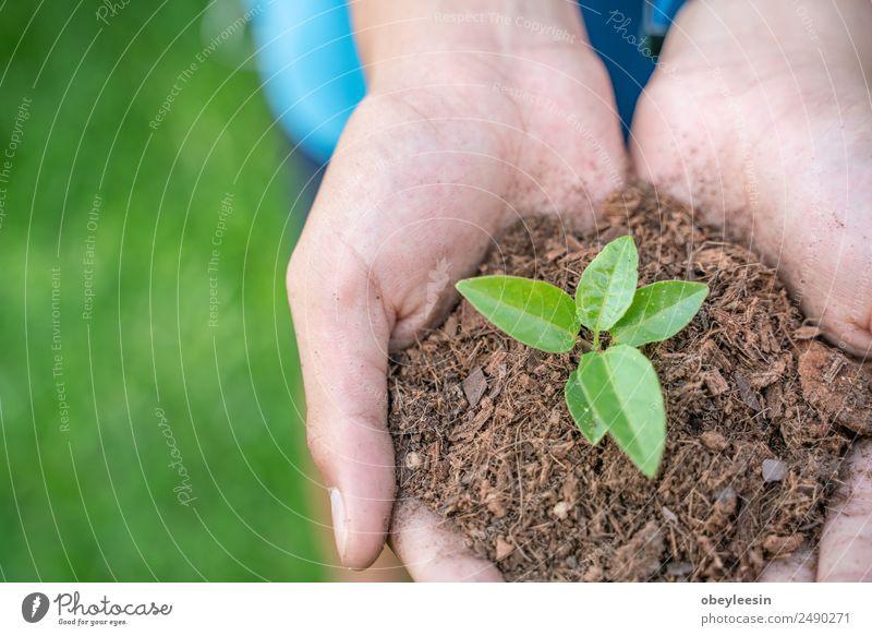 Warten auf das Wachstum von Kaffeebäumen. Frucht Getränk Industrie Hand Natur Pflanze Baum Blatt frisch heiß grün rot organisch Laoten Java Ernte Schonung