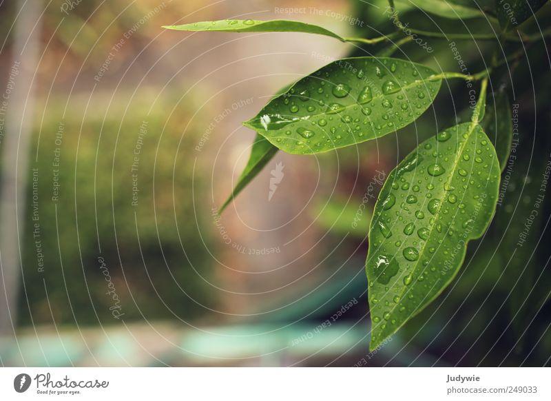 Im Regenwald Sommer Umwelt Natur Wasser Wassertropfen schlechtes Wetter Pflanze Sträucher Blatt Grünpflanze Garten Urwald Flüssigkeit frisch nass natürlich grün