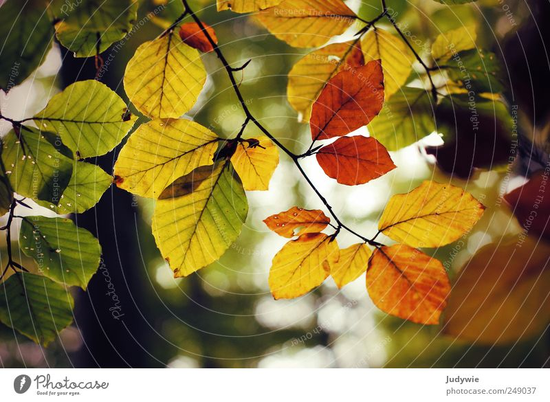 Bald schon wieder Umwelt Natur Himmel Herbst Pflanze Baum Blatt Wald Wachstum alt natürlich Farbe Leben Verfall Vergänglichkeit Wandel & Veränderung