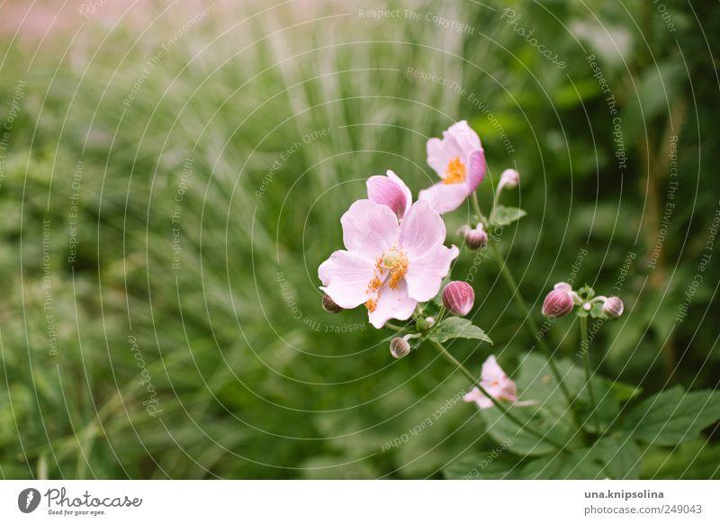 aller guten blümchen sind drei. Natur grün schön Pflanze Blatt Wiese Gras Blüte Park rosa frisch natürlich Blühend Duft positiv Grünpflanze