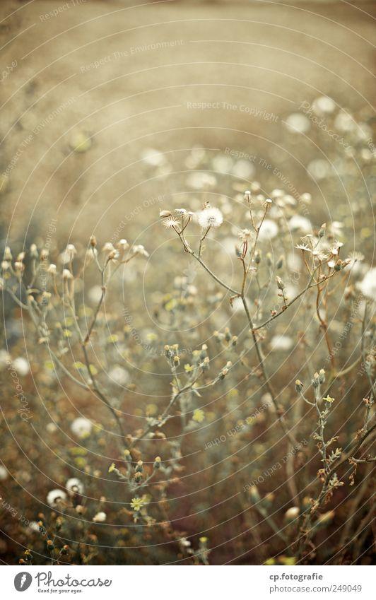 letzter Gang Pflanze Wiese Herbst Garten Blüte natürlich Sträucher Schönes Wetter Nutzpflanze Wildpflanze