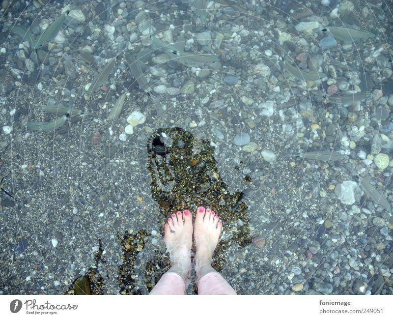Les orteils roses Wasser Meer Fisch Nagellack rosa blau Beine Tierfuß Fußzehen Angeln Schatten Mut frech kalt Sommer Collioure Frankreich