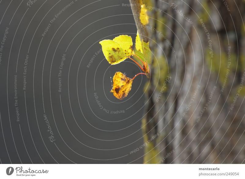 Es wird Herbscht Natur grün Baum Pflanze Blatt Herbst grau klein Park natürlich Schönes Wetter Grünpflanze