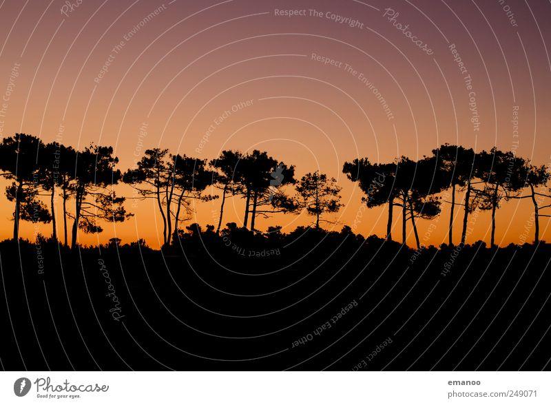 die trockene Pinie Himmel Natur Baum Pflanze Sommer Ferien & Urlaub & Reisen Wald Umwelt Landschaft Küste Wetter Klima heiß Düne Baumstamm Schönes Wetter