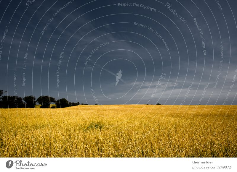 Nordlicht Ferne Freiheit Sommer Feld Landwirtschaft Forstwirtschaft Landschaft Erde Luft Himmel Horizont Schönes Wetter Wind Pflanze Baum Getreide Getreidefeld