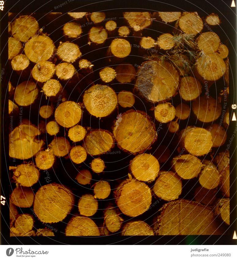 Holz Natur Baum Umwelt Landschaft liegen viele rund Landwirtschaft Stapel Forstwirtschaft Brennholz Jahresringe