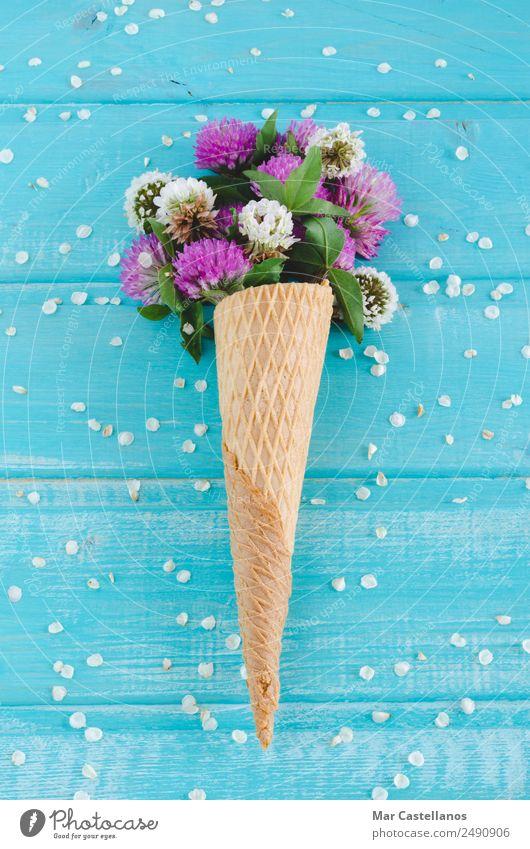 Sommer blau Pflanze schön Farbe grün weiß Blume Blatt Frühling Blüte natürlich Wiese Gras Kunst Garten