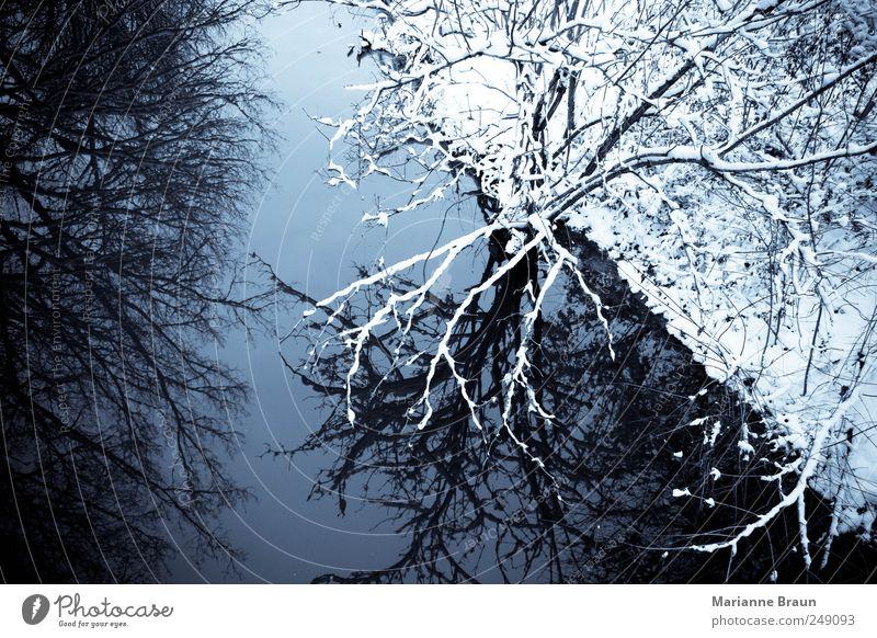 Winter in ... Natur Wasser Himmel Eis Frost Schnee Baum Wald Flussufer Bach Blick kalt schwarz weiß Stimmung schön Schönes Wetter Reflexion & Spiegelung