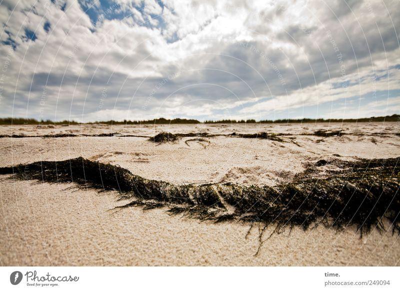 Strand. gut. Himmel Natur Pflanze Strand Wolken Ferne Leben Umwelt Sand Küste Zufriedenheit Horizont wild Stranddüne Düne Schönes Wetter