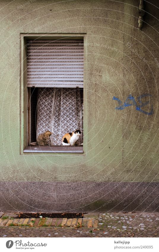 katzenjammer Haus Tier Fenster Katze 2 Wohnung sitzen offen Häusliches Leben Bürgersteig Vorhang Haustier Jalousie Fensterbrett Rollladen