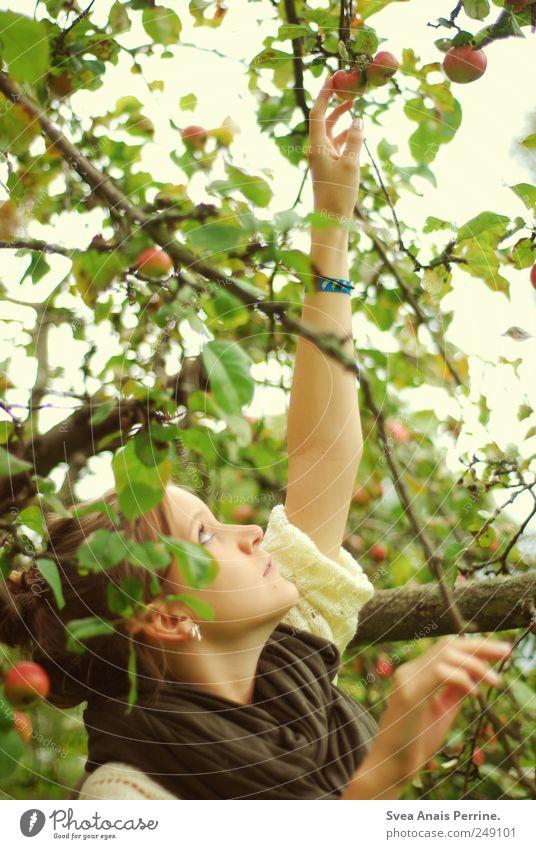 nach den äpfel greifen. Mensch Jugendliche Baum Erwachsene natürlich 18-30 Jahre Neugier Apfel Junge Frau Mut brünett Pullover Schal Frucht Apfelbaum