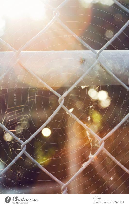 Mädchenknast Sonne Wärme Gitter Gitternetz Drahtgitter Drahtzaun Zaun Spinnennetz regenbogenfarben Farbfoto Außenaufnahme Menschenleer Tag Licht Sonnenlicht