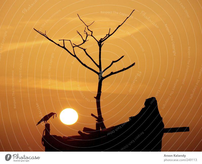 Himmel Natur Sonne Sommer Wolken ruhig Tier Erholung Küste Vogel ästhetisch Coolness einfach Schönes Wetter Wohlgefühl harmonisch