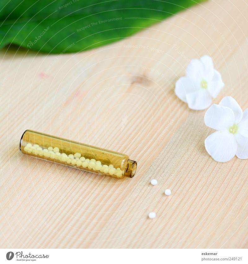 Globuli Natur weiß grün Pflanze Blatt klein Blüte hell braun Gesundheit natürlich frisch ästhetisch Gesundheitswesen rein Freundlichkeit