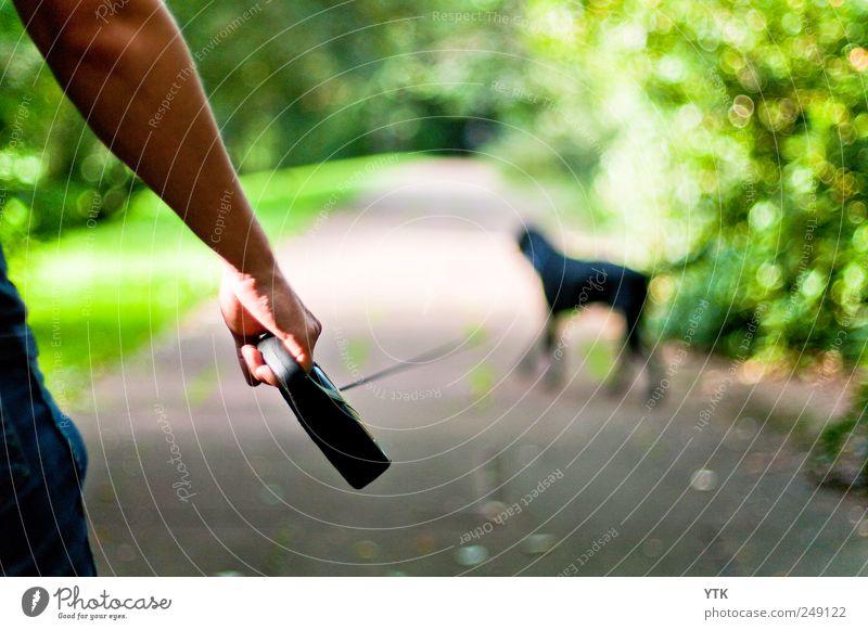 Wer geht mit wem? Mensch Mann Hand schwarz Tier Erwachsene Hund Freiheit Bewegung Wege & Pfade Kraft Freizeit & Hobby Arme gehen maskulin 18-30 Jahre
