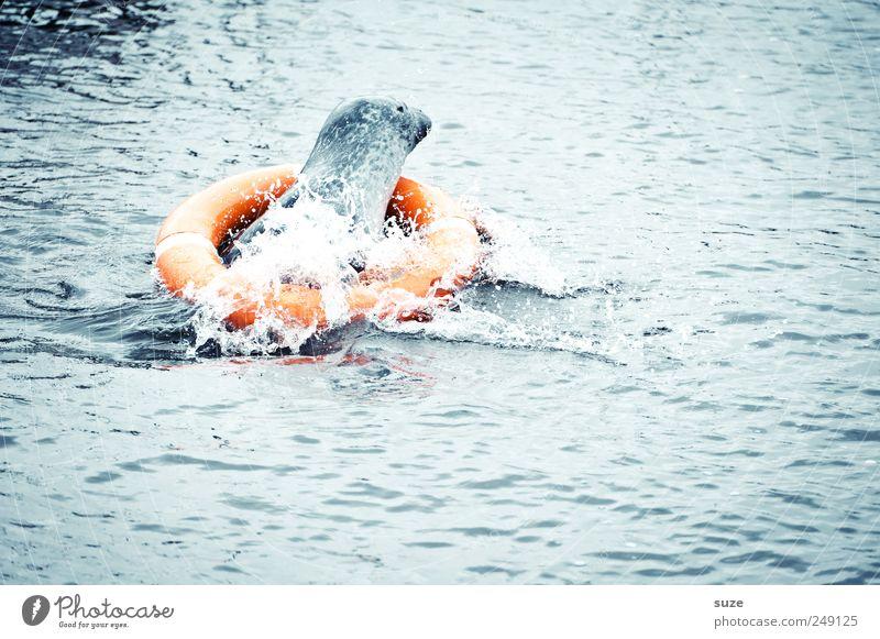 Rettungsschwimmer blau Wasser Meer Tier lustig Wellen Schwimmen & Baden Wildtier wild Wasseroberfläche retten Rettungsring spritzig Robben Seehund