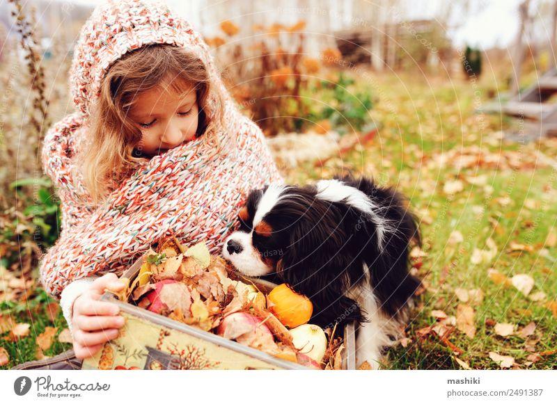 fröhliches Kind Mädchen mit einem Korb voller Äpfel, das mit ihrem Hund spielt. Apfel Lifestyle Freude Spielen Familie & Verwandtschaft Freundschaft Kindheit