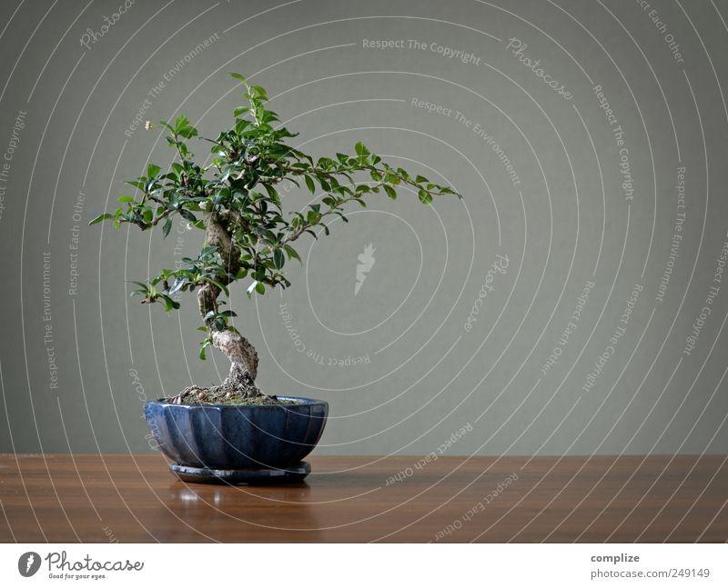 Asiatischer Zierbaum mit 6 Buchstaben schön Baum Pflanze Haus Garten Stil klein Kunst Wohnung elegant Tisch Häusliches Leben einzigartig Dekoration & Verzierung
