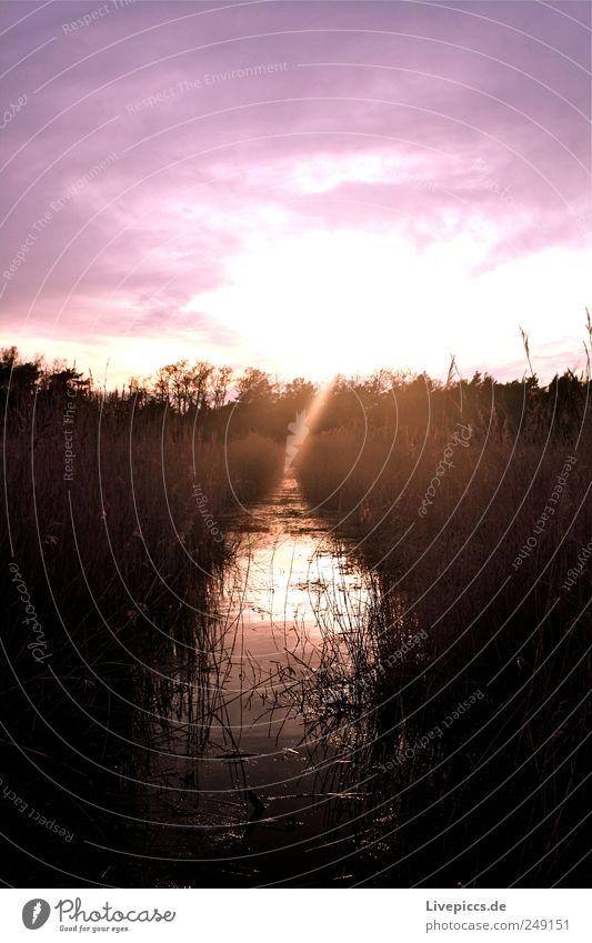 Lilalaune Himmel Natur Wasser Pflanze Sommer Ferien & Urlaub & Reisen schwarz Umwelt Landschaft rosa Ausflug ästhetisch Insel Sträucher Fluss violett