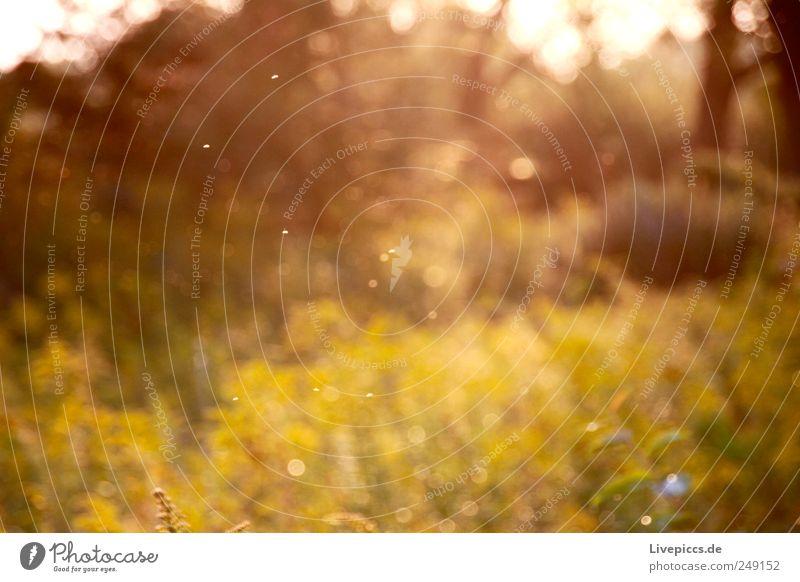 kleine scharfe Tierchen Natur grün Pflanze Sommer gelb Umwelt Wiese Landschaft braun glänzend Dorf Sommerurlaub Morgendämmerung Unschärfe Fischerdorf