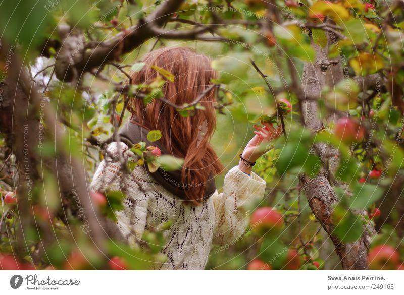apfelzeit. Junge Frau Jugendliche Haare & Frisuren 1 Mensch 13-18 Jahre Kind Umwelt Natur Herbst Baum Apfelbaum Garten Park Pullover Schal brünett langhaarig