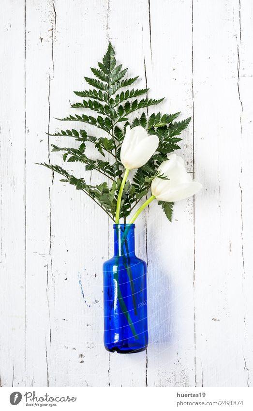 Tropisches Palmblatt elegant Stil Design exotisch Garten Dekoration & Verzierung Kunst Natur Pflanze Blume natürlich grün weiß Farbe Hintergrund Schot tropisch