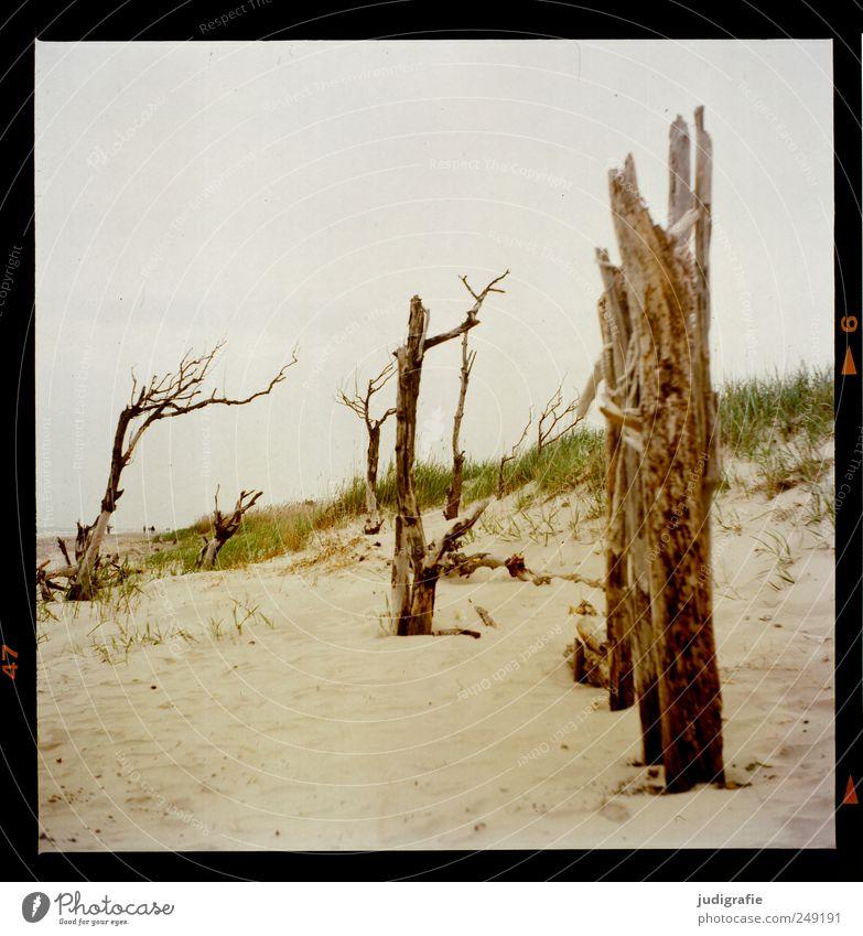 Weststrand Umwelt Natur Landschaft Pflanze Sand Baum Gras Küste Strand Ostsee Darß dehydrieren Wachstum natürlich Stimmung Tod Vergänglichkeit