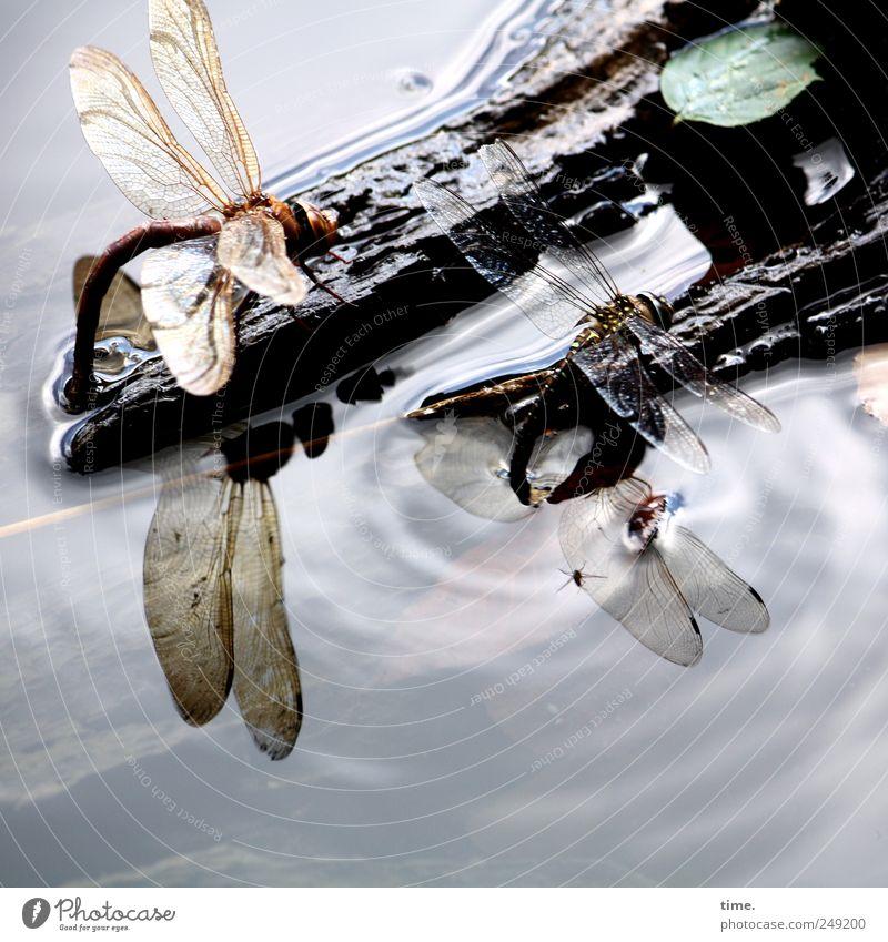 Tankstelle Himmel Natur Wasser Blatt Tier Umwelt Holz fliegen See Wellen sitzen Flügel Ausflug trinken Insekt Sonnenbad