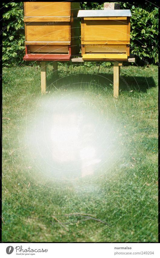 warp the bee Freizeit & Hobby Imkerei Natur Sommer Schönes Wetter Zeichen fliegen leuchten trashig nachhaltig Teamwork Fehler Bienenstock Honig Sportrasen