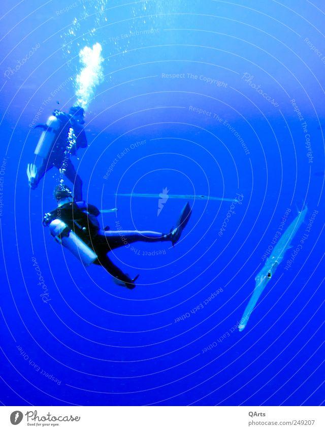 Let's go diving! Ferien & Urlaub & Reisen Tourismus Abenteuer Safari Sommerurlaub Meer Insel Wellen Schwimmen & Baden tauchen Mensch Leben 2 Umwelt Natur Wasser