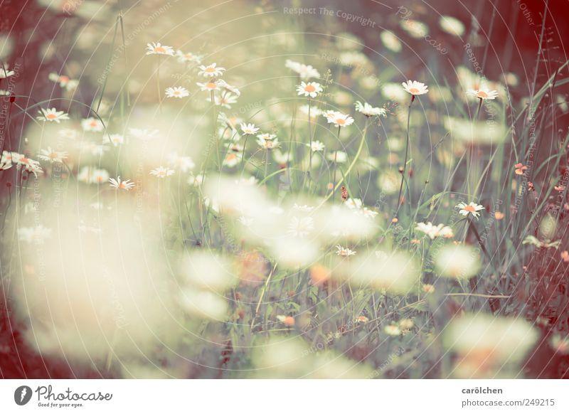 Wiese die 1000ste Natur grün gelb Umwelt Gras braun natürlich ökologisch Blumenwiese biologisch Biotop Wiesenblume