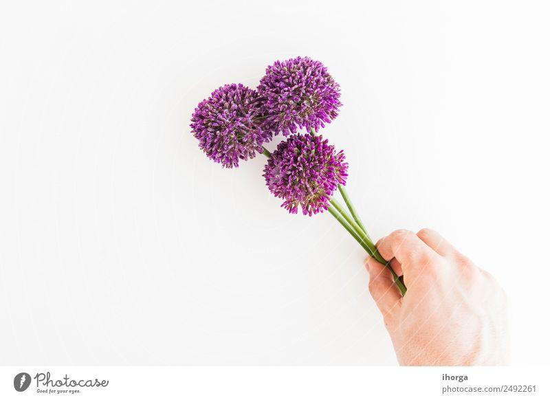 Allium isoliert auf weißem Hintergrund Kräuter & Gewürze elegant Garten Dekoration & Verzierung Feste & Feiern Valentinstag Muttertag Mensch Hand Finger Natur