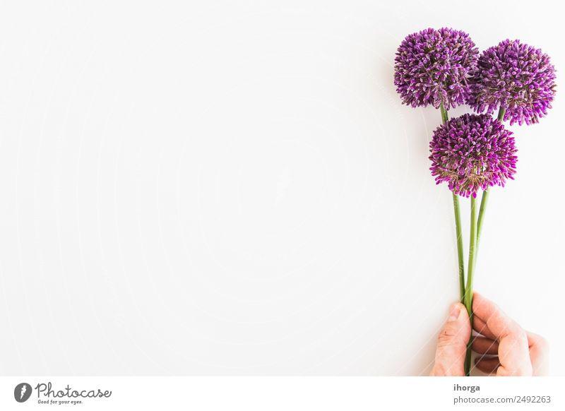 Allium isoliert auf weißem Hintergrund Kräuter & Gewürze elegant schön Garten Dekoration & Verzierung Feste & Feiern Valentinstag Muttertag Mensch Hand Finger