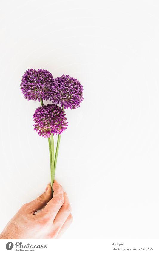 Allium isoliert auf weißem Hintergrund Kräuter & Gewürze schön Garten Dekoration & Verzierung Feste & Feiern Valentinstag Muttertag Mensch Hand Finger Natur