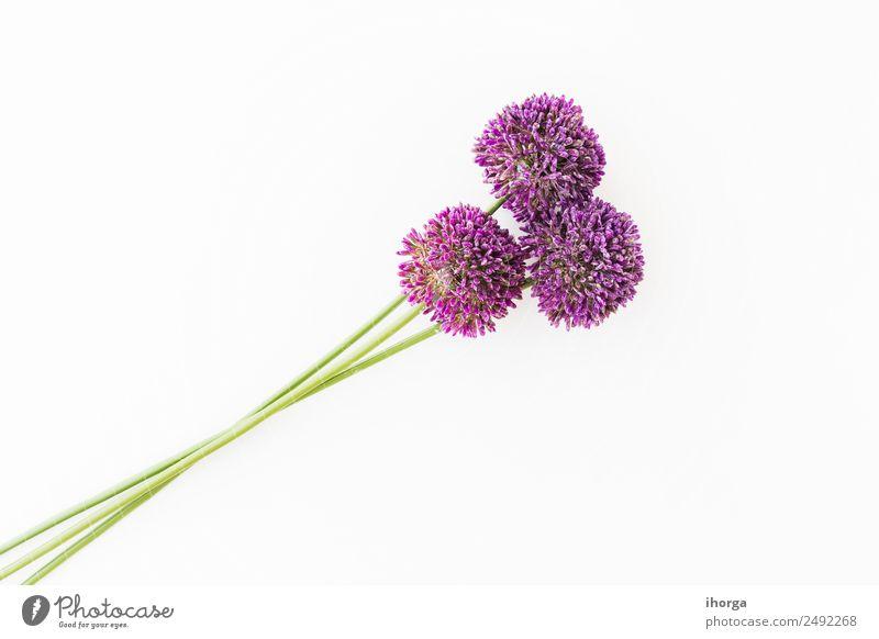 Allium isoliert auf weißem Hintergrund Gemüse Kräuter & Gewürze schön Feste & Feiern Valentinstag Muttertag Natur Pflanze Blume Liebe Wachstum frisch natürlich