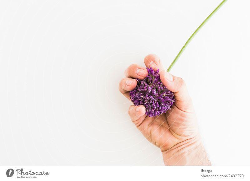 Allium isoliert auf weißem Hintergrund Gemüse Kräuter & Gewürze elegant schön Garten Feste & Feiern Valentinstag Muttertag Mensch Hand Finger Natur Pflanze